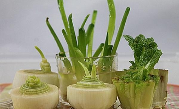 C mo cultivar verduras en casa for Cultivar vegetales en casa