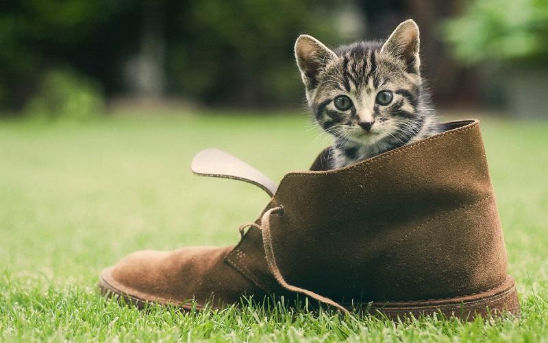 C mo eliminar el olor desagradable de los zapatos - Como eliminar el olor a humedad de una habitacion ...
