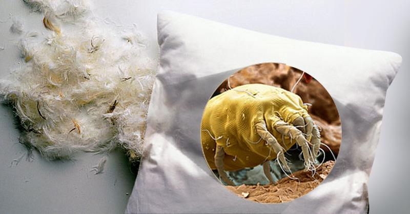 M todo para eliminar los caros del polvo de tu cama - Acaros del colchon ...